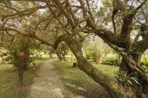 Área verde com árvores nativas