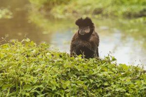 Macaco na área verde do HIG