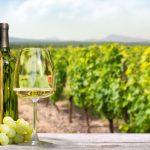 Vinho branco com pomar de uvas