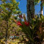 Flores e natureza no Hotel Internacional Gravatal
